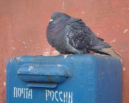 Работница почты украла пенсии на 2,4 млн рублей