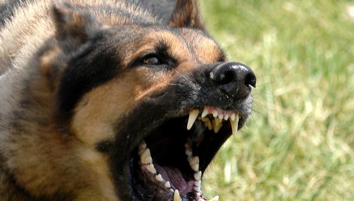 Литовские пограничники натравили собаку на беженцев
