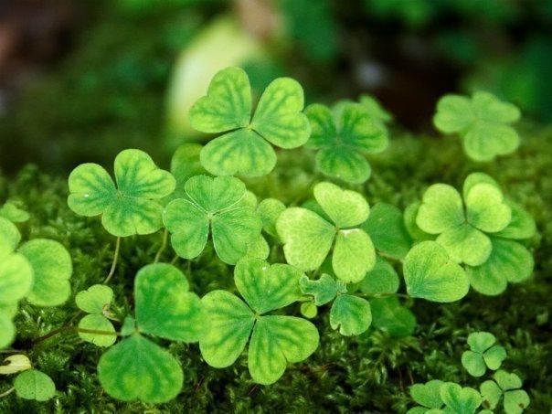 Неделя Ирландии пройдет в Москве с 11 по 22 марта