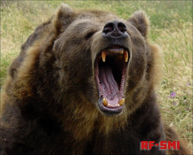 В Армении медведь напал на туристов из Польши