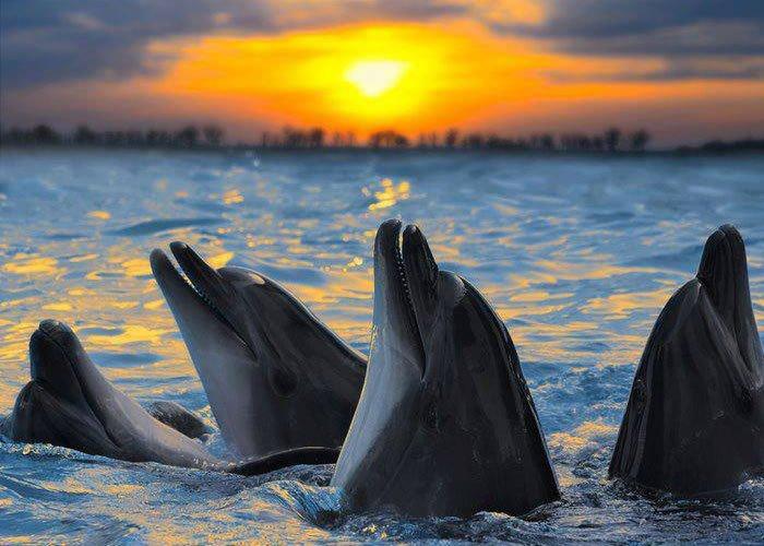 Учёные доказали, что дельфины умеют видеть звуки.