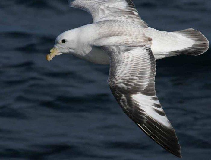 За последние 60 лет морских птиц стало на 70% меньше.