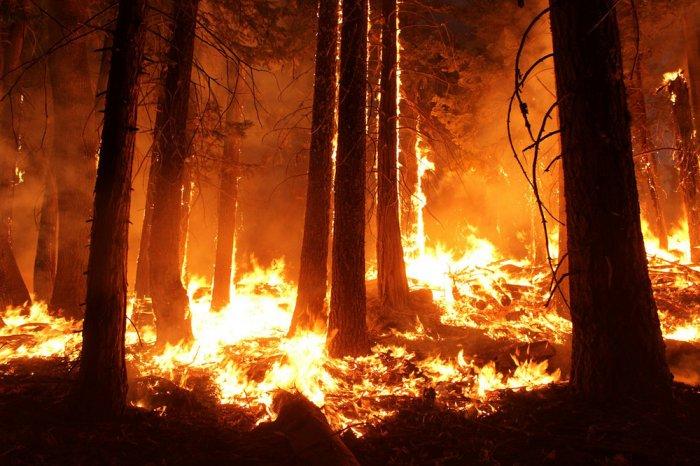 В Бурятии за сутки площадь пожаров возросла до 16 тыс. га