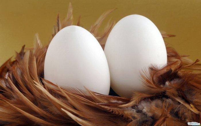 Российские птицеводы пожаловались на нехватку яиц