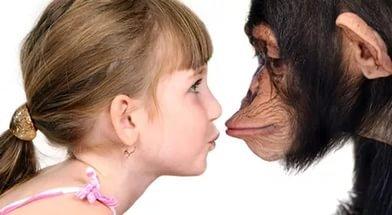 Быстрый метаболизм помог человеку стать умнее обезьяны.