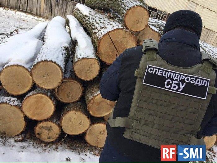 """Украинские силовики """"вскрыли"""" схему нелегального экспорта леса"""
