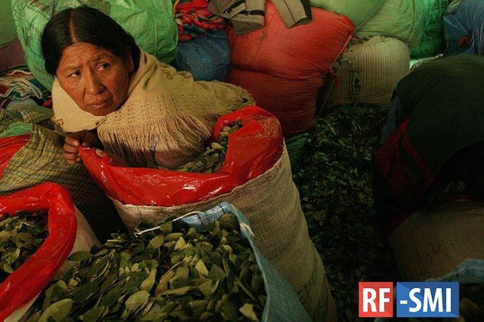 Производители коки в Боливии объявили мобилизацию для возвращения Эво Моралеса