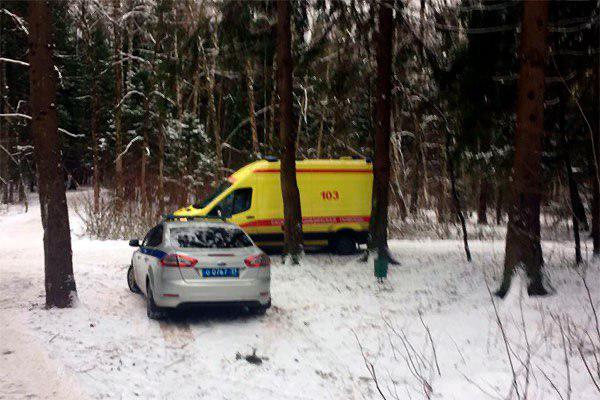 В Зеленограде инспектора лесопарка  насмерть придавило деревом