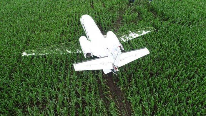 Ещё одна посадка на кукурузном поле . На этот раз в Аргентине