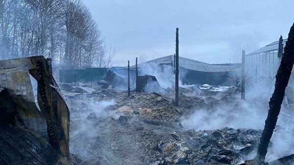 Восемь человек погибли при пожаре в тепличном комплексе в Подмосковье