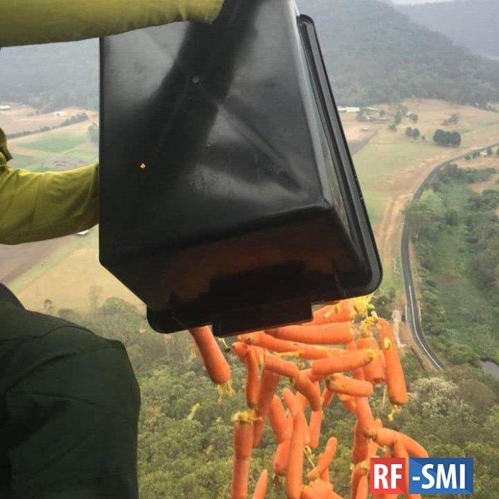 В Австралии с вертолетов сбросили тонны овощей