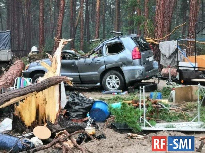 В Красноярском крае во время грозы сильный ветер повалил деревья на кемпинг.