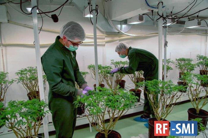 ООН исключила марихуану из списка наиболее опасных наркотиков