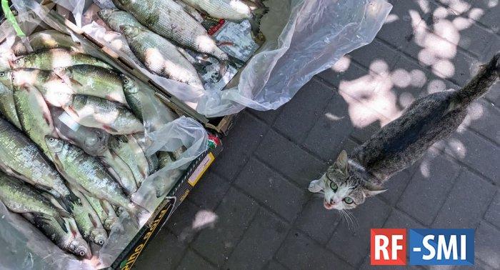 В Армении запретят лов сига сроком на месяц